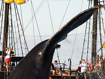 Whale Watching, Eco Tour december thru April